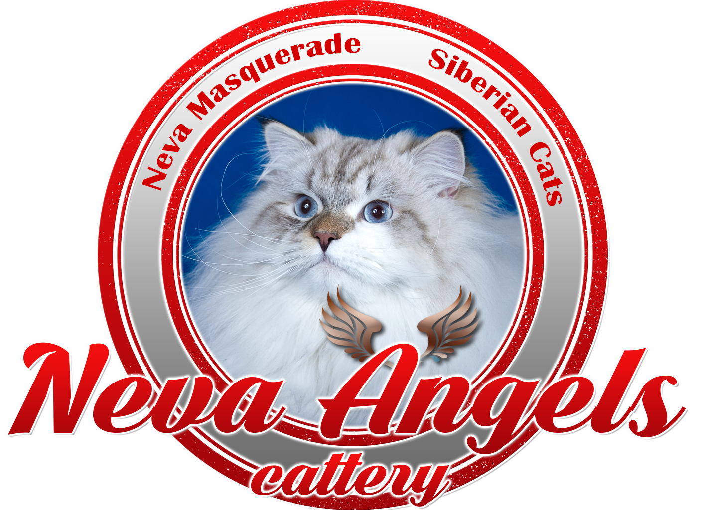 Neva Angels cattery